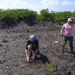 Paul plante un pied de palétuvier au Myanmar